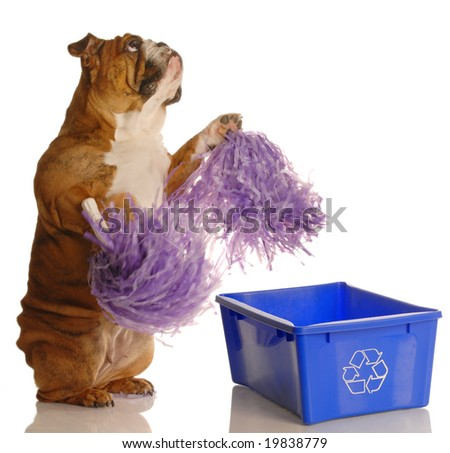 dog standing up with pompoms encouraging recycling - please recycle - stock photo