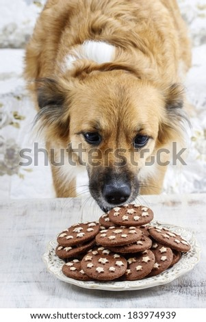 Dog stealing a cookie - stock photo
