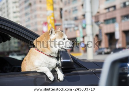 Dog sticking his head out of a car window enjoy winter sunny day in the city. - stock photo