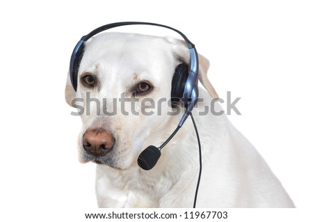 Dog support operator listening with headset on help lline. - stock photo