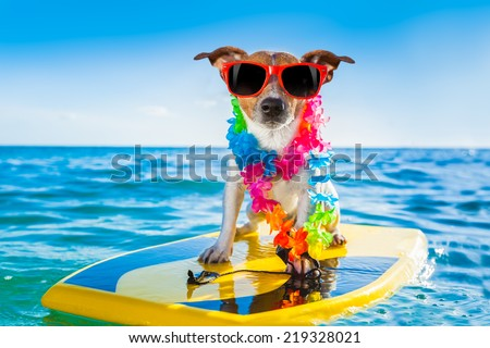 dog surfing on a surfboard wearing a flower chain and sunglasses, at the ocean shore - stock photo