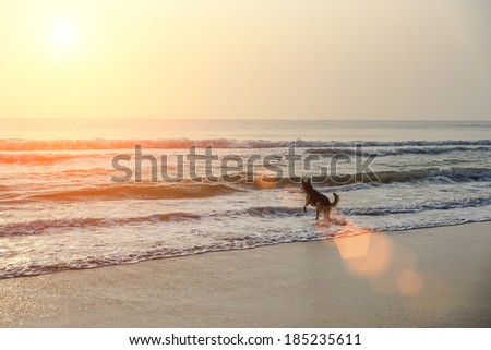 Dog swim in the morning on the beach.