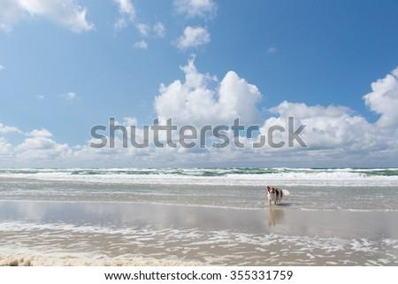 Dog swimming in the North sea - stock photo