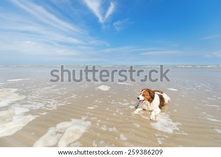 dog swimming in the sea - stock photo