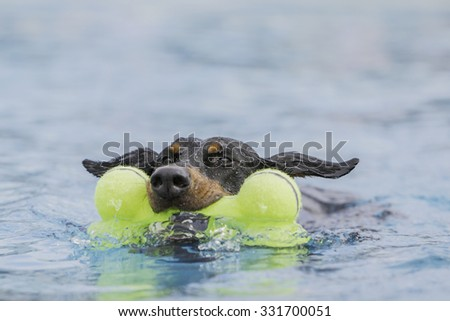 Dog swimming while holding a toy  - stock photo