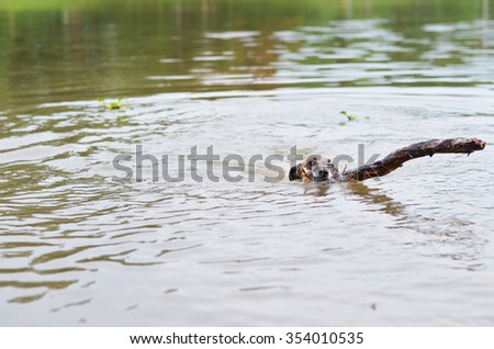 Dog swimming with the wood in its mouth