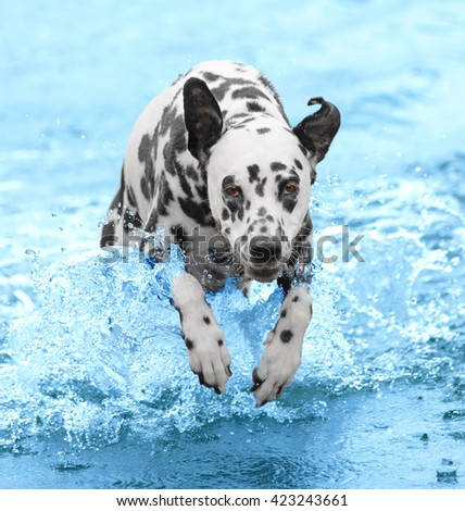 Dog swims and runs into the sea or river - stock photo