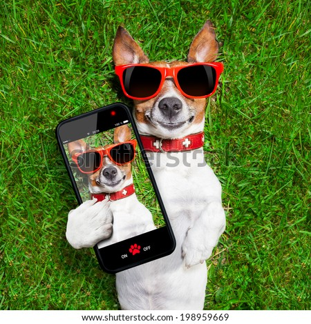 dog taking a selfie and smiling at camera - stock photo