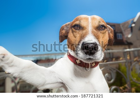 dog taking a selfie with a smartphone - stock photo