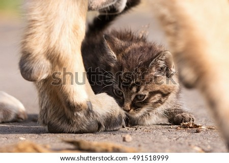 Dog taking care of young small cat