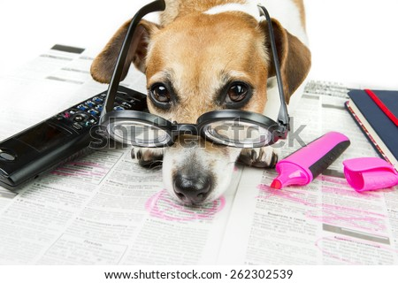 Dog tired looking for a job. Disappointment does not live up to expectations - stock photo