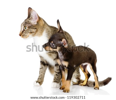 dog together with a cat look aside. isolated on white background - stock photo