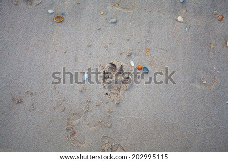 Dog trace on the sand at the seashore - stock photo