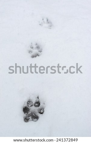 dog tracks in the snow - stock photo