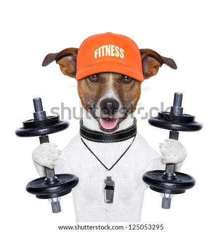 dog training with dumbbells and a whistle - stock photo