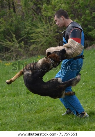 dog trainnig - stock photo