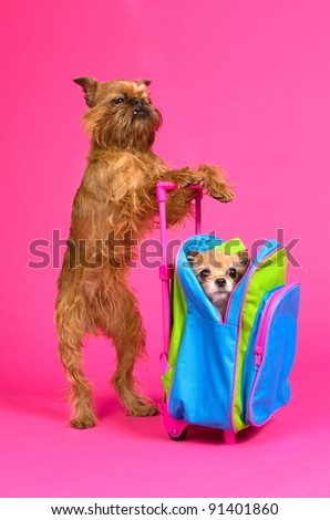 Dog travel, isolated on pink background