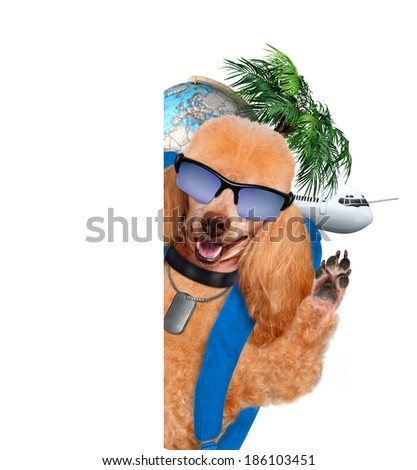 Dog traveler - stock photo