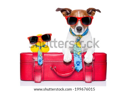 dog traveling with yellow plastic duck on top of luggage - stock photo