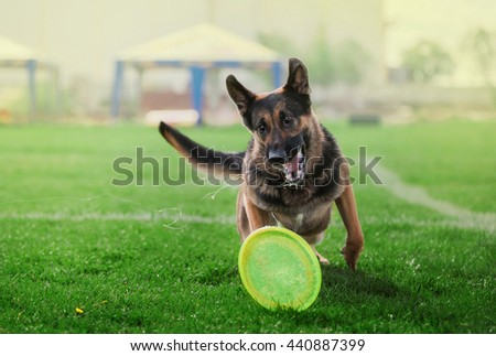 dog trying to catch plastic disk