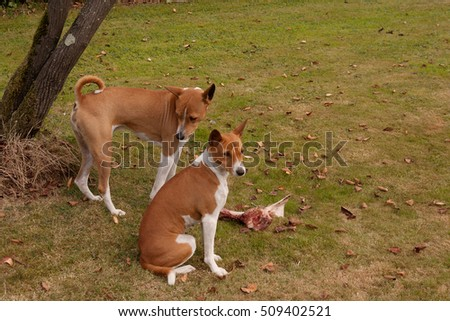 dog trying to look innocent while coveting friend's bone