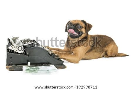 dog typewriter on a white background in studio - stock photo