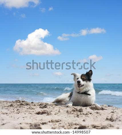dog under blue sky - stock photo