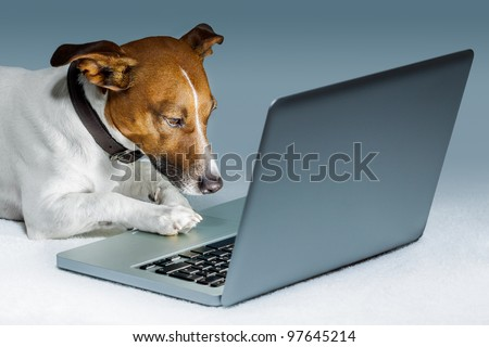 dog using a computer and browsing the internet - stock photo