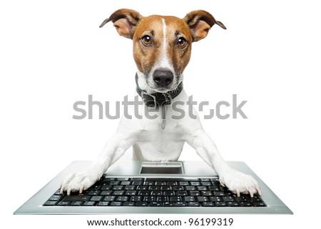 dog  using a laptop - stock photo