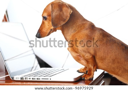dog using laptop - stock photo