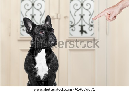 dog waiting at the door ready to play or have fun together   - stock photo