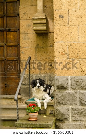 dog waiting for owner at the door - stock photo