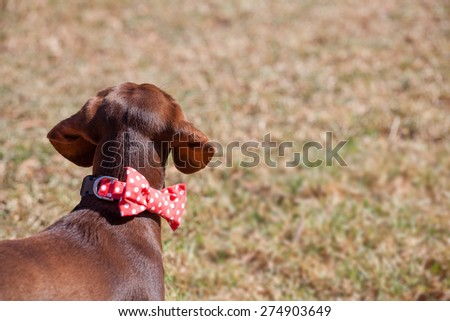 Dog waiting for owner - concept. - stock photo
