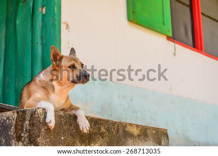 Dog waiting for someone at home. - stock photo