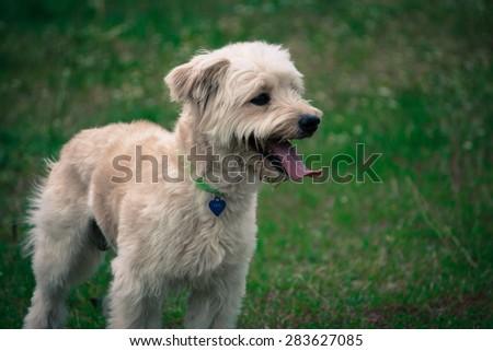 Dog waiting his friend - stock photo