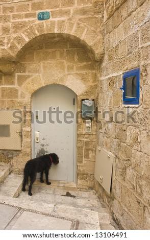 Dog waiting in front the door - stock photo