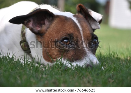 Dog Waiting on the Grass - stock photo