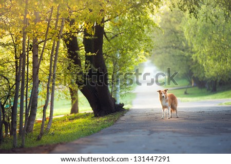 dog walking in the spring park - stock photo