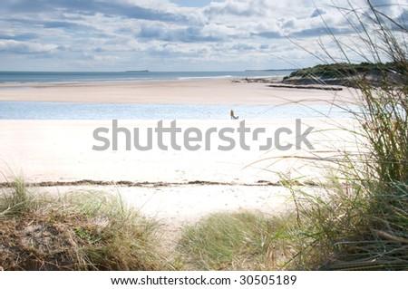 Dog walking on Alnmouth beach - stock photo