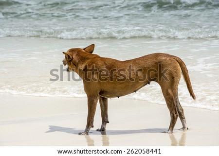 Dog walking on the beach, summer breeze  - stock photo