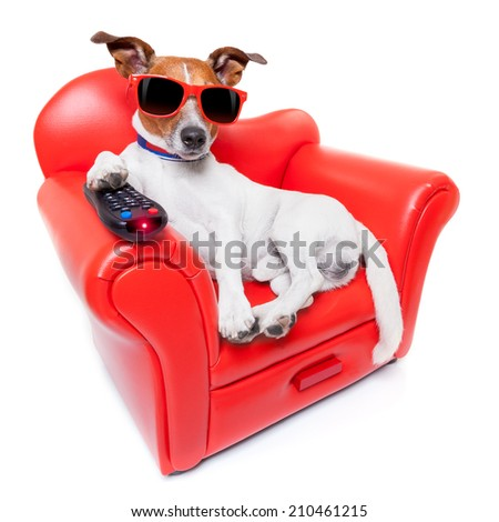 dog watching tv or a movie sitting on a red sofa or couch  with remote control changing the channels - stock photo