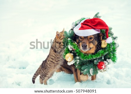 Dog wearing christmas wreath and santa hat sitting with kitten outdoors in snow