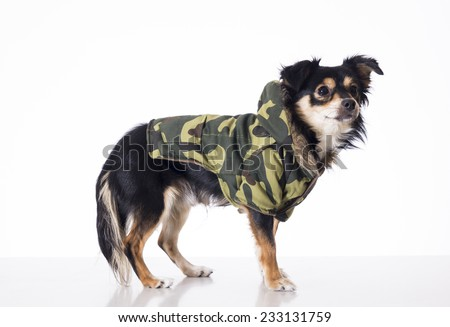 Dog wearing clothes - stock photo