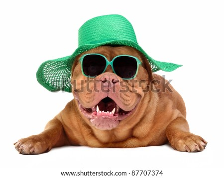 Dog wearing green straw hat and sun glasses, isolated - stock photo