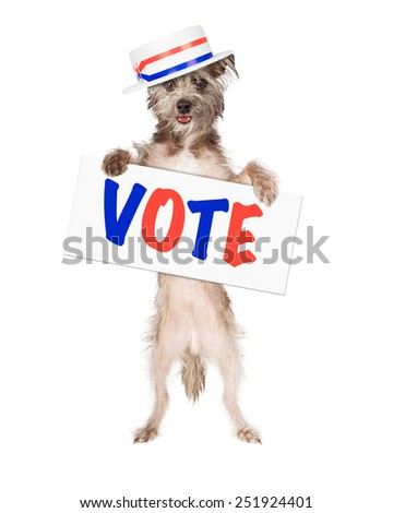Dog wearing politician hat holding red, white and blue vote sign - stock photo