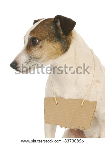 dog wearing sign - jack russell terrier with cardboard sign around neck - stock photo