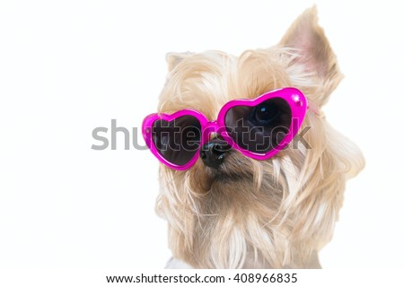 Dog wearing sunglasses heart shaped looking at the camera on a white background