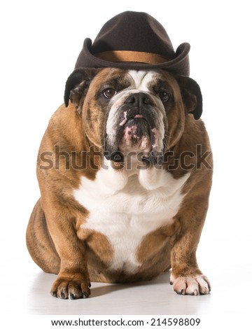 dog wearing western hat isolated on white background - english bulldog