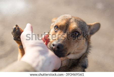 dog weasel hand on nature - stock photo