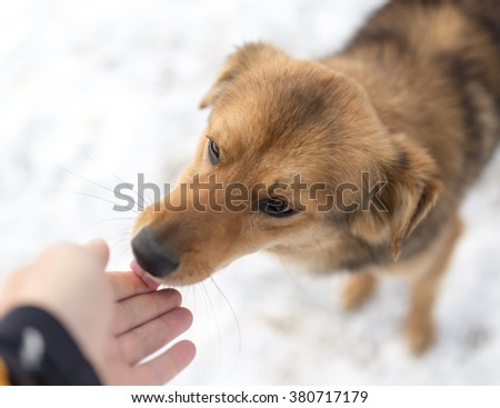 dog weasel hand winter outdoors